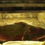Scarpa appartenuta a Pio IX Donata a Francesco Starace padre della Madre